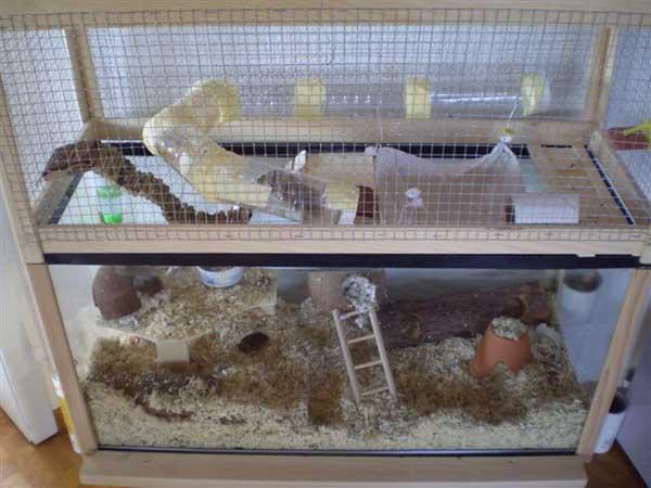 Maison A Etage Plan : Fiches de bricolage gt extension cage en hauteur une
